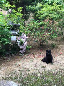 クロワッサンの庭
