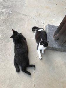 飼い猫と野良猫