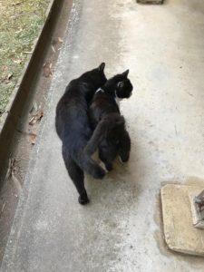仲良しの猫二匹