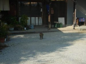 ハナアカリ 外観とネコ