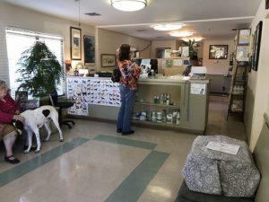 カリフォルニアの動物病院